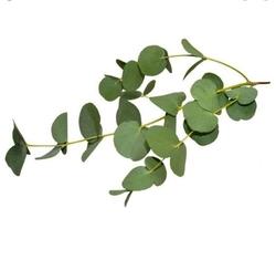 Paku Malzeme - Ökaliptus kesici; 3 parça (1)